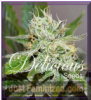 Delicious Original Juan Herer Fem 5 Weed Seeds
